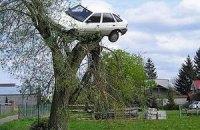 Поляк знайшов свій автомобіль на дереві
