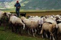 Більш ніж 3 тисячі молодих італійців стали пастухами