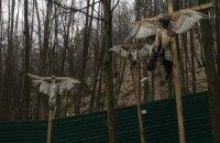 В Межигорье нашли кресты с распятыми соколами