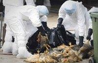В Херсонской области зафиксирована вспышка птичьего гриппа