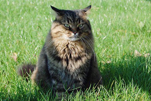И в завершение - серьезный кот от Татьяны Сорокуз