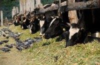 «Більшовицьке» ставлення влади до фермерів веде Україну в прірву