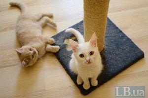 Домашний приют для кошек в Киевской области нуждается в помощи
