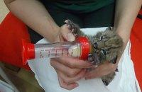 В Киевском зоопарке родился рысенок