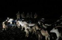 Двое мужчин ночью пытались перегнать в Россию 53 козы