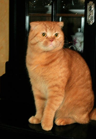 Кот от читателя Gordeladze