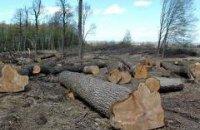 Во Львовской области чиновники лесхозов разворовали леса на 6,5 млн грн