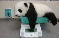 П'ятнична панда #90