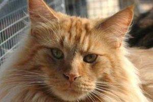 Похитители вернули прожорливого кота хозяевам