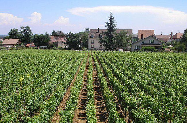 Во Франции виноградники признаны частью национального богатства