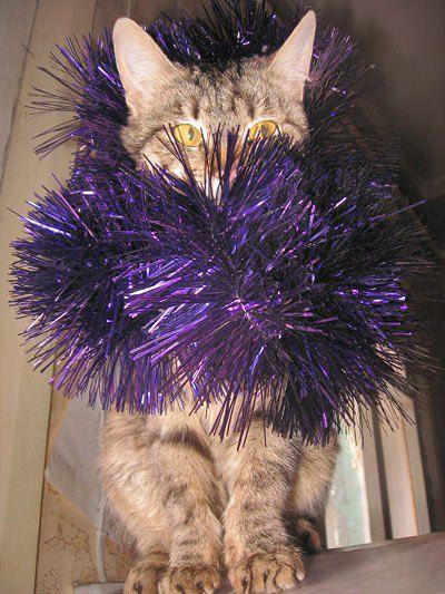 Кот от Марины Семилетовой