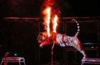 Кабмін пропонує заборонити в Україні цирки з тваринами, але через п'ять років