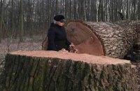 В Киеве открыли уголовное дело из-за вырубки вековых дубов в Голосеевском парке