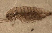 У Китаї знайшли тисячі невідомих науці скам'янілостей
