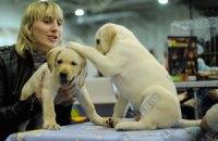 В Николаеве владельцев собак обязали вживить животным электронные чипы