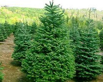 Чипы на елках спасли тысячи деревьев от незаконной вырубки
