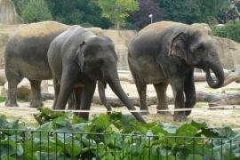 Киевский зоопарк получит трех слонов