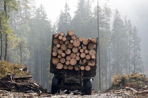 Чим загрожує карпатським лісам новий закон про заборону вирубки дерев?