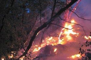 На Луганщині горять 4,5 га лісу і трави