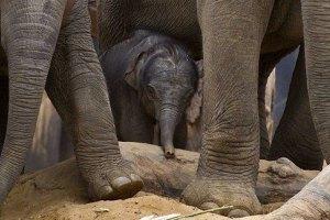 В Зимбабве браконьеры отравили 80 слонов цианидом