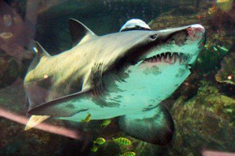 У Єгипті від нападу акули постраждала українська сім'я