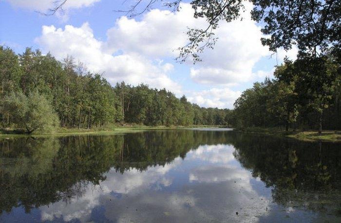 Озеро посеред Бiличанського лісу, смт Коцюбинське