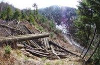 Прокуратура відкрила справу про вирубку лісу в Карпатах