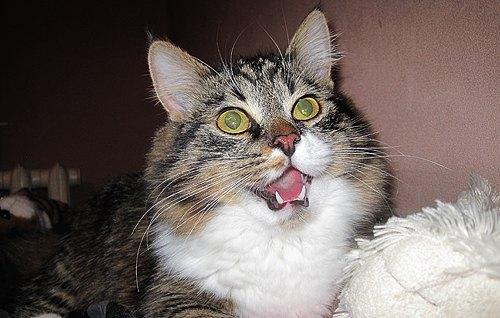Це фото кішечки і наступні два нам надіслала читачка Алла