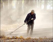 В Днепродзержинске палые листья превратят в удобрение