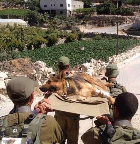 Cолдаты Цахал выносят раненую собаку с передовой