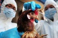 У Китаї зафіксували перший у світі випадок зараження людини пташиним грипом H10N3