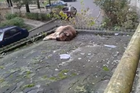 В Луцке мужчина выбросил собаку с 9-го этажа