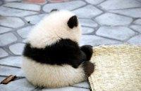 П'ятнична панда #89