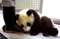 Пятничная панда #173