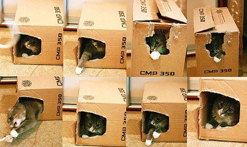 Игривый кот в коробке того же авторства