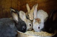 Во Львовской области мужчина украл с фермы корм для кролей на 80 тыс. гривен