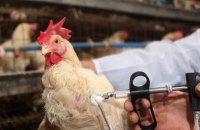 У Росії повідомили про перші в світі випадки зараження пташиним грипом H5N8