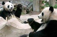 Пятничная панда #109