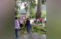В Азербайджане упала ветвь 500-летнего дерева и придавила 19 человек
