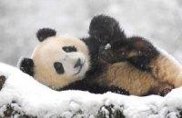 Пятничная панда #172. Новогодний выпуск