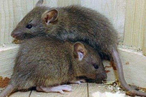 Новый хантавирус из Китая сравнили с коронавирусом
