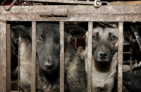 Китай виключив собак з категорії тварин, чиє м'ясо можна їсти