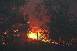 МНС: пожежу в Ялтинському заповіднику ліквідовано