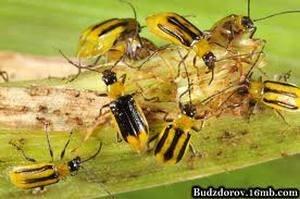 Мешканець Нью-Йорка тримав у квартирі три мільйони бджіл