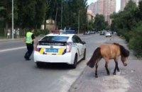 У Києві патрульні спіймали поні, який втік (оновлено)