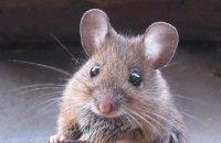 На Сумській митниці миші з'їли дві тонни конфіскованих горіхів, - ЗМІ