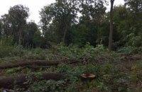 """После драки """"титушек"""" с местными и полицией в Буче застройщик все-таки вырубил лес"""