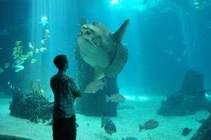 Австралия хочет открыть крупнейший в мире морской заповедник