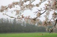 Кліматологи розповіли про контрастну погоду в квітні в Києві