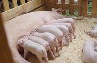 ВТО сочла запрет РФ на поставку свинины из ЕС дискриминационным